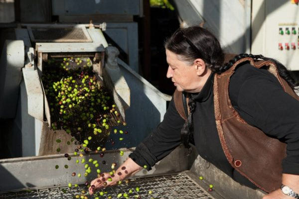 DOP Olive Oil Tour from Rome - Day Trips from Rome, Italy