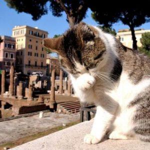 Tour Roma Con Bambini
